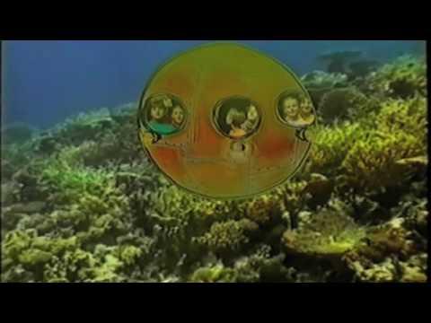 Arfik – Podwodne ogrody