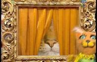 Budzik – Kocie fotki kociej ciotki