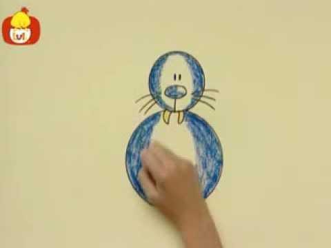 Kręgi – Fokowate, dla dzieci