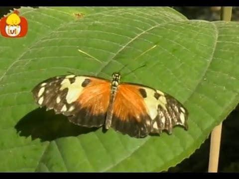 Czas zwierząt – Słoń + Motyl, dla dzieci