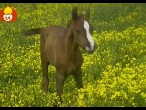 Czas zwierząt – Koń + Kaczka, dla dzieci