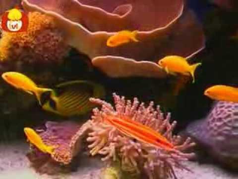 Czas zwierząt – Ryba + Alpaka, dla dzieci