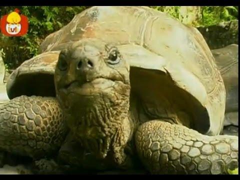 Czas zwierząt – Małpa + Żółw, dla dzieci