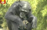 Czas zwierząt – Mysz + Szympans, dla dzieci