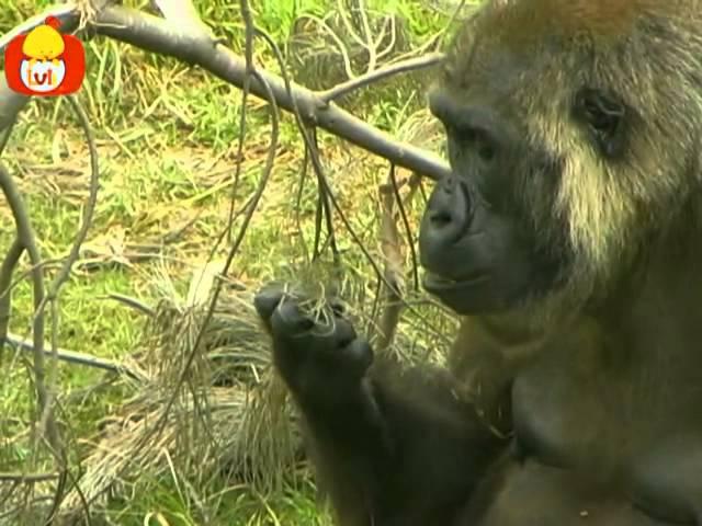 Czas zwierząt – Goryl + Papuga, dla dzieci