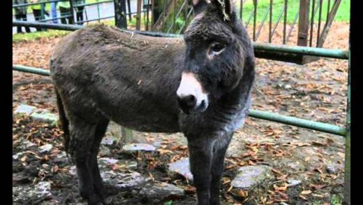 Zwierzęta – odgłosy zwierząt dla dzieci – Animal Sounds
