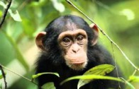 Odgłosy zwierząt – Zwierzęta domowe
