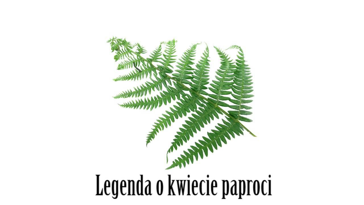 Legenda o kwiecie paproci