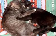 Aaa, kotki dwa – Kołysanka dla Najmłodszych