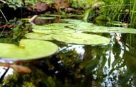 Muzyka Relaksacyjna Woda Żabki Świerszcze 100% Naturalne