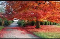 Wietrzyku – Psotniku masz chmurki przegonić – Piosenka o Jesieni