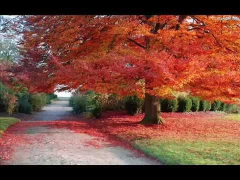 Piosenka o Jesieni: Jesienne Wędrowaniie