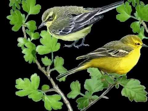 Ptaszek w drzewach głośno śpiewa,  że już wiosnę witać trzeba